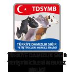 TDSYMB